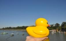 大黄鸭在手中图片