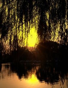 夕阳金辉映湖面图片
