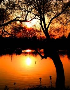 太阳金辉映湖面图片