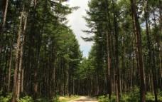 丛林小路图片