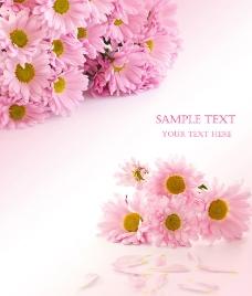花朵移门设计图片