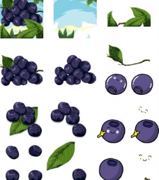 蓝莓合集图片
