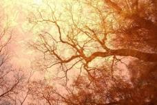 怀旧树木树枝背景图片
