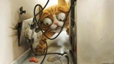 咖啡猫图片