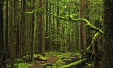 联邦国家森林公园图片