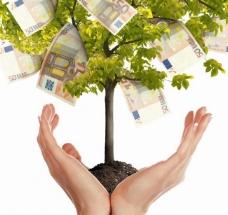 手中的金钱树图片