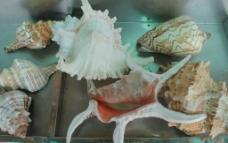贝壳工艺品图片
