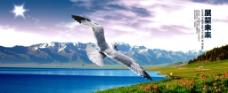 展翅飞翔 展望未来图片