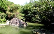 绿荫中的水潭图片