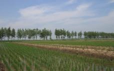 绿色稻田图片
