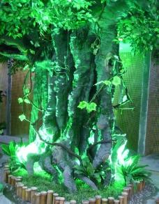 室内景树图片