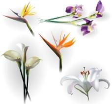 矢量花卉素材图片