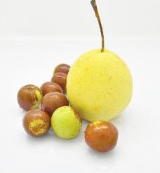 水果 梨子和枣子图片