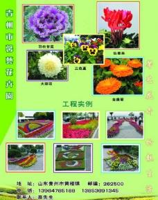 馨艺花卉2图片