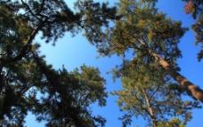 园林风光图片