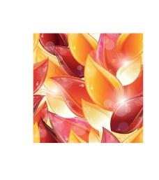 绚丽缤纷鲜艳花朵图片