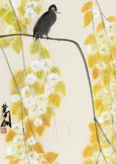 梨花小鸟图片