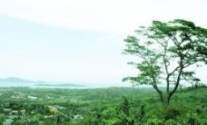 泰国普吉岛山坡上图片