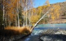 新疆的秋天图片