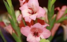 花束 粉花 花朵图片