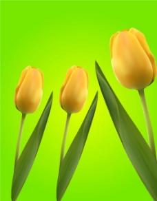 鲜艳郁金香图片
