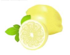 水果矢量图 柠檬图片