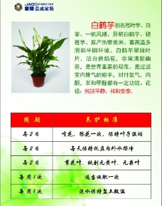 植物吊牌图片
