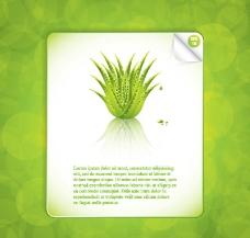 芦荟植物素材图片