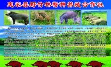 野猪彩页图片