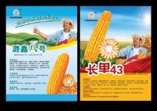 玉米种子宣传