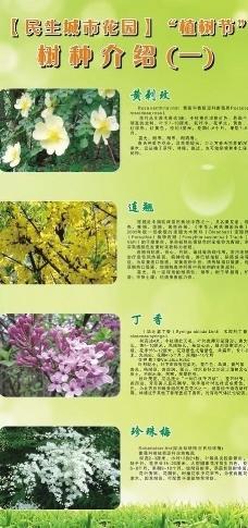 树种介绍图片