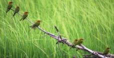 一群鸟儿图片