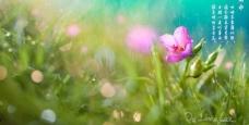 春天雨水图片