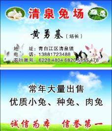 兔子名片图片