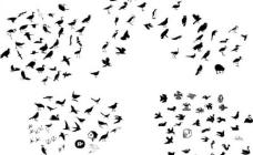 鸟类简图图片