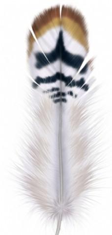 手绘羽毛图片