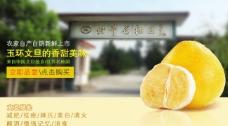文旦 柚子 玉环图片