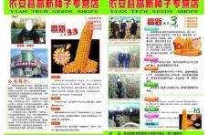 玉米彩页图片