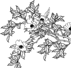 山茶花矢量圖圖片