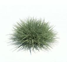 植物模型 草模型图片