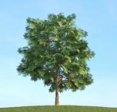 树木模型 高大植物图片