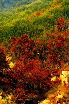 山中彩色树林图片