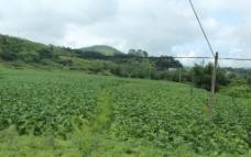 田地风景图片
