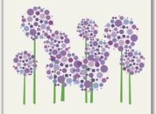 紫色太阳花图片