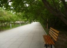 小路上的椅子图片