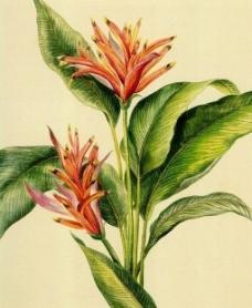 花卉油画43 (50厘米 x 60厘米 有网格)图片