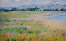 海湾湿地图片