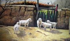 农家小羊图片