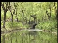 小河柳树桥亭视频
