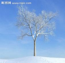 冬季树木模型 树模型图片